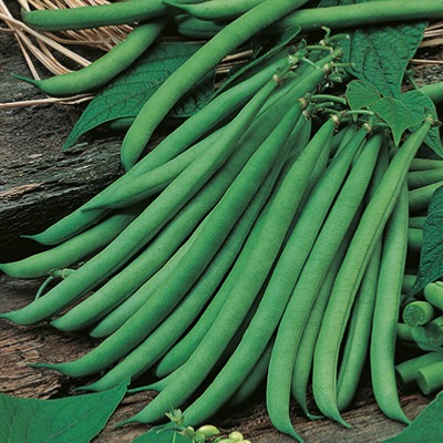 Climbing French Bean Cobra Seed