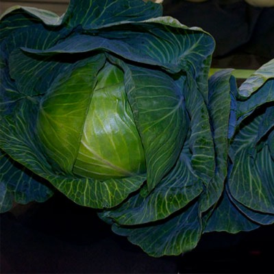 Cabbage Autumn Green Type Pronca F.1 Hybrid