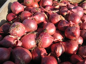 Shallot (Red) Prisma F1 Hybrid Seeds