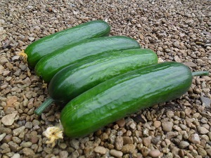 Cucumber Baby Star F.1 Hybrid Seeds