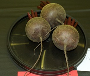 Beetroot - Round types
