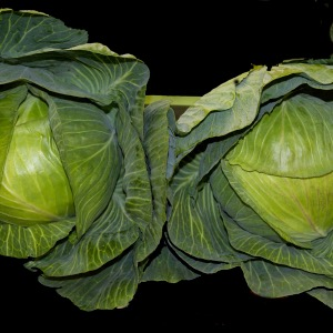 Dutch White Cabbage Seeds