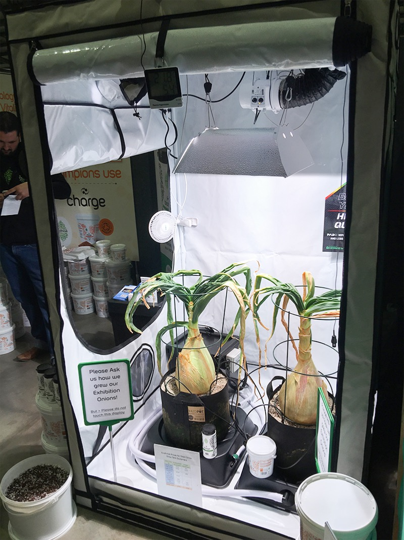Homebox Ambient Q120 Grow Room Fosters Seeds