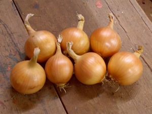 Overwintering Onion Bridger F.1 Hybrid Seeds