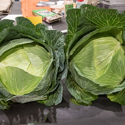 Cabbage Seeds Giant Hercules