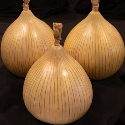 Large Dressed Onion Reselected Championship Stock