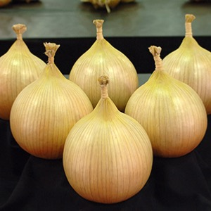 Ailsae World Record Onion and other varieties.