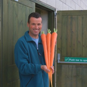 Carrot Long Pointed