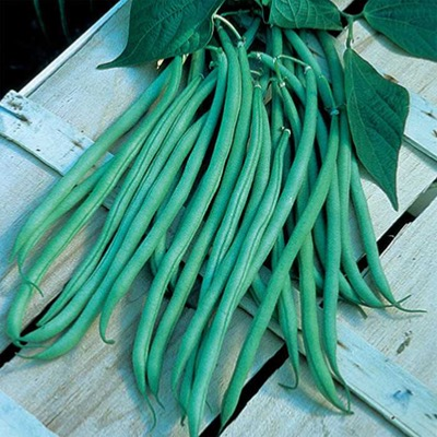 Climbing French Bean Fasold Seeds