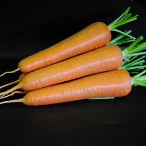 Carrots Short Nantes Types