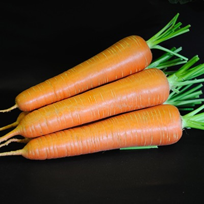 Carrot Sweet Candle Seeds Top Size Seed