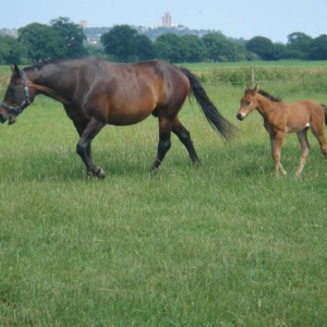 Grass Seed For Paddocks and Racehorse Gallops