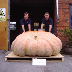 Giant Pumpkins Seeds