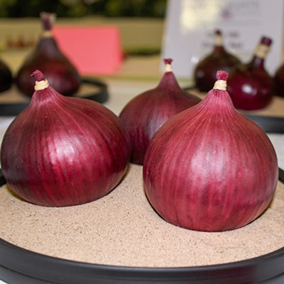 Overwinter Onion Red Barren F.1.Hybrid Seeds