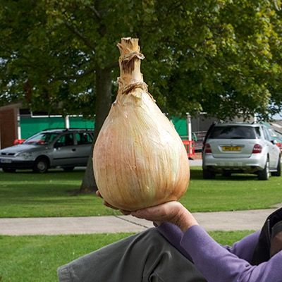 Giant Onions.World  Record Strain Ailsae Seeds