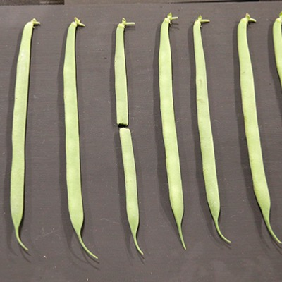 Dwarf French Bean - The Prince Seeds