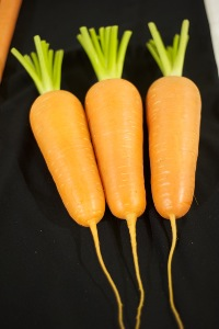 Carrot Abaco - Kuroda x Chanteney type